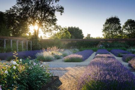 Folly Farm Lavender by Jason Ingram