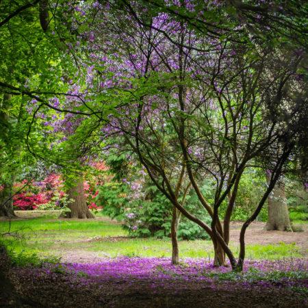 Purple Rain by Steve Brenman