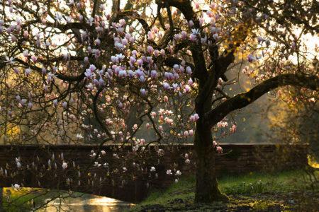 <i>Magnolia</i> by Ulrike Adam