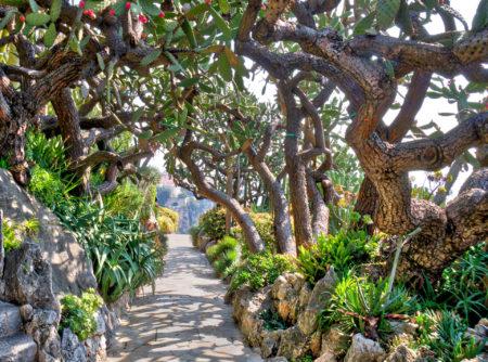 Exotic Garden by Matthew Cremin
