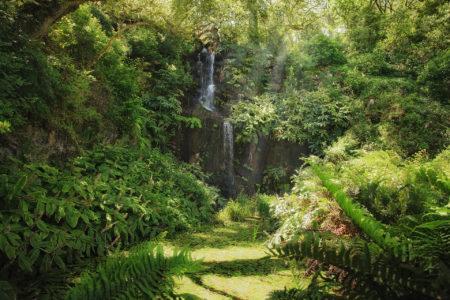 Waterfall by Carole Anne Ferris