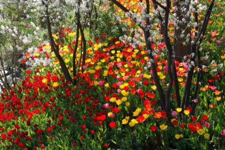 Blütenträume by Roland Pircher