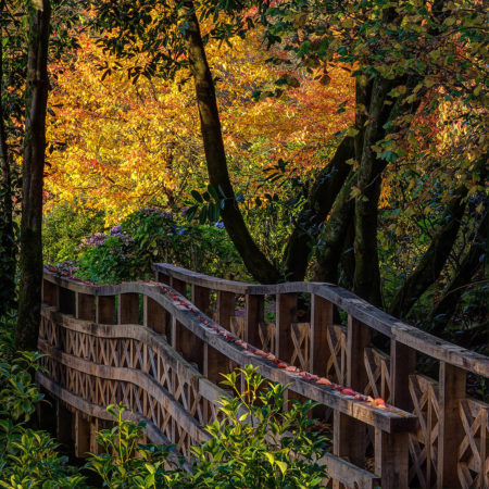 Autumn Evening at Aberglasney by Nigel McCall