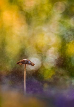 Undergrowth by Marco Zamò