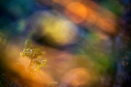 Enchanted Forest by Anna Ulmestrand