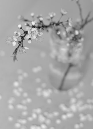 Spring is on its Way by Judit Filipinyi