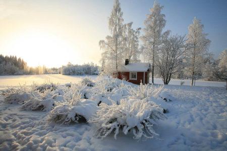 Sunrise in Northern Country Garden by Sergey Karepanov