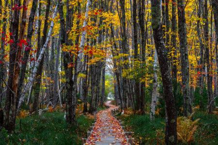 Jesup Path in Fall by J.K. Putnam