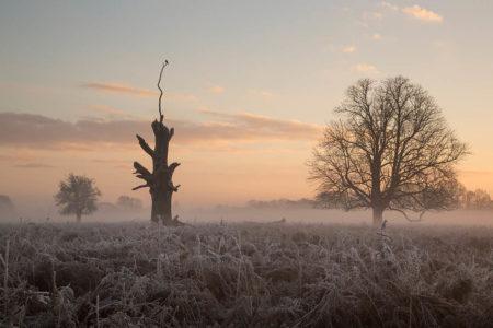 Winter's Morning by Duncan Herring