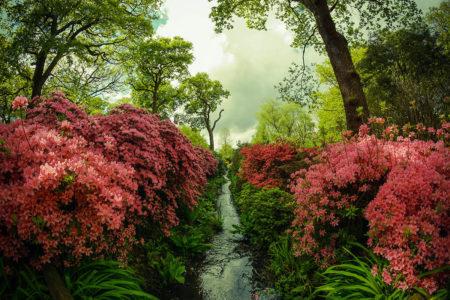 Isabella Plantation by Simon Hadleigh-Sparks