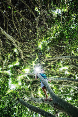 The Leafy Way by David Malikoff