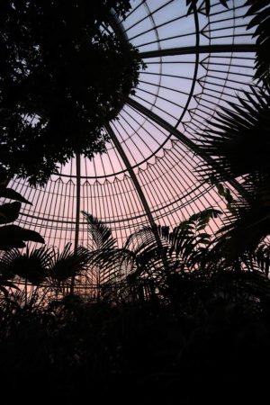 Sunset in the Palm House by Jeff Eden