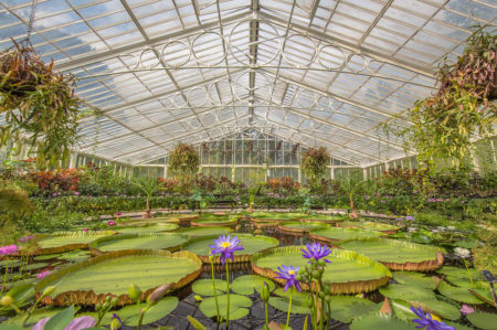 Waterlily House by Emma Davies