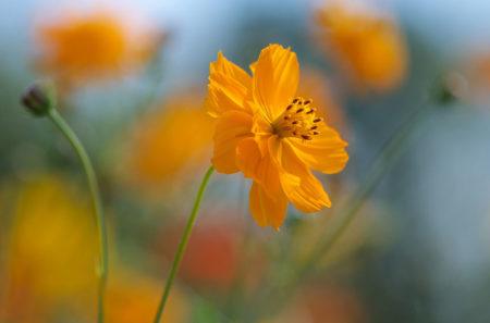 Autumn's Glory by Barbara Fischer