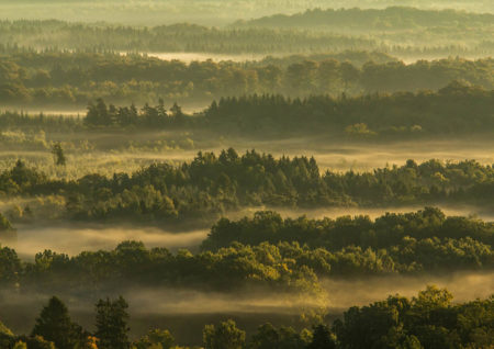 Forest and Mist by Håkan Liljenberg