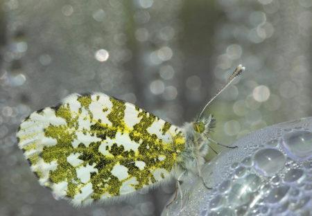 Sleeping Butterfly by Catherine Walker