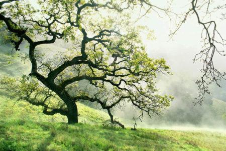 Blue Oak by Saxon Holt