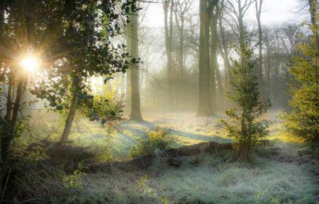 Frosty Fallen by Simon Lea