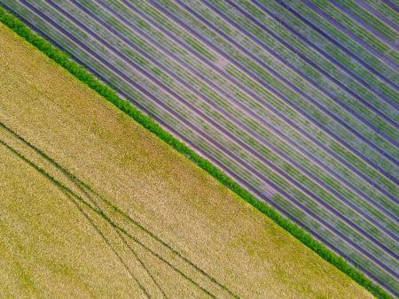 Crop Art by Will Jenkins