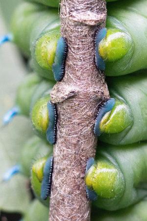 Caterpillar Feet by Tonya Wilhelm