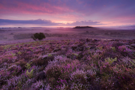 Pink Sunrise by Andy Farrer