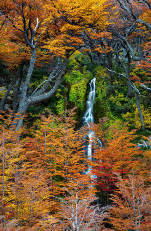Autumn in Patagonia by Anil Sud