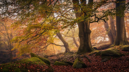 Autumn in Padley Gorge by Dave Fieldhouse