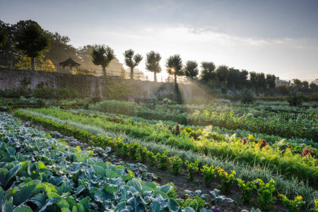 Kasteel Kitchen Garden by Jason Ingram