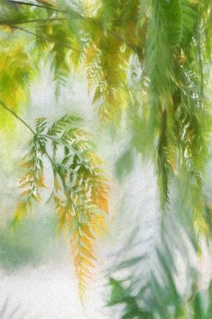 Impressionistic Ferns by Jocelyn Horsfall