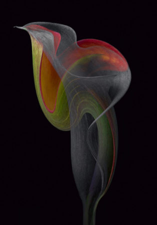 Exotic Swirl by Cindy Vondran