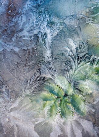 Through Icy Glass by Carol Casselden