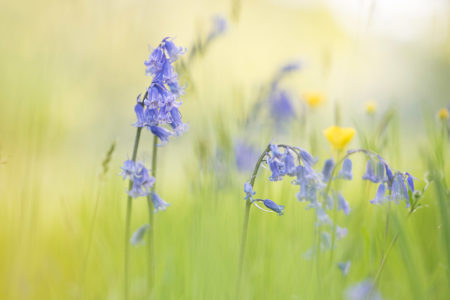 Bluebell Time by Alison Staite
