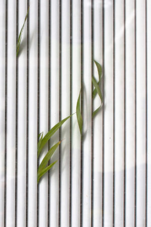 Windows by Dagmar Haggenburg