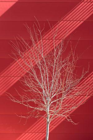 Urban Trees II by J. Ramon Moreno