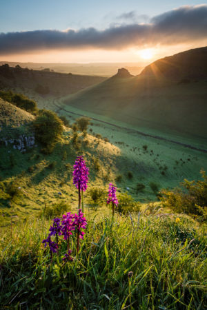 Early Purple Orchids by Graham Dunn