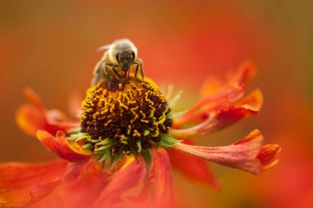 Honeybee by Roop Khural