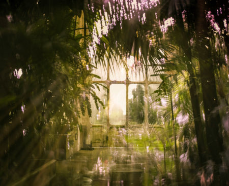 The Palm House by Paula Cooper