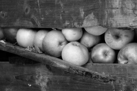 Free Apple! by Martin Staffler