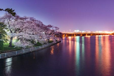 Potomac Cherries by Amanda Kleinman