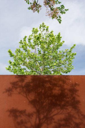 Urban Trees I by J. Ramon Moreno