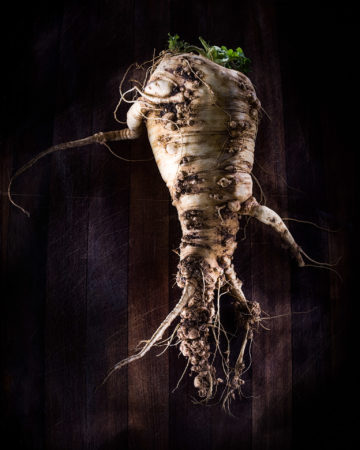 Portrait of a Home-Grown Parsnip by Katherine McInroy