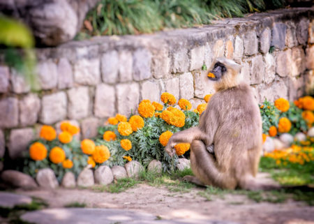 Monkey Business by Anna Forbes