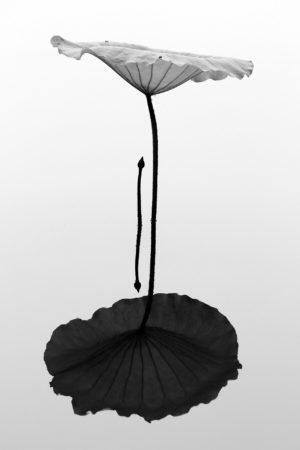 An Umbrella for You by Minghui Yuan