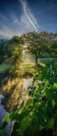 Autumn Morning at Syon House Garden by Simon Hadleigh-Sparks