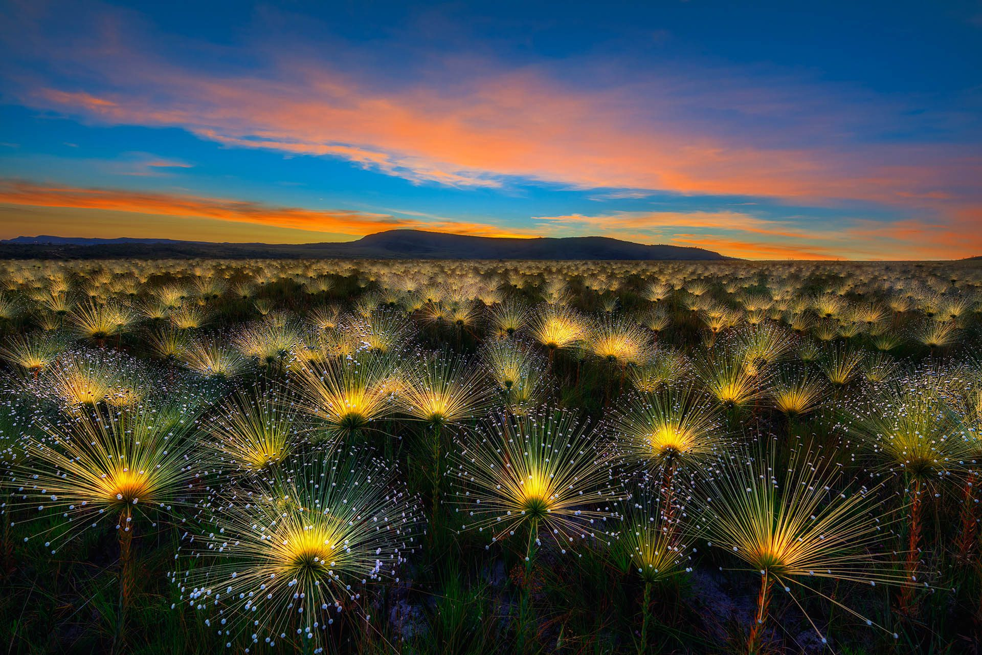 Cerrado Sunrise, the Winner of the International Garden Photographer of the Year Competition 11