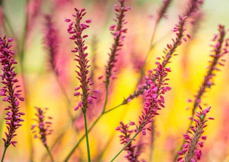 Better Plant and Garden Photography - Stockton Bury Gardens