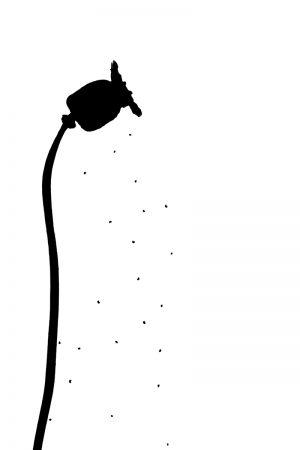 Poppy Seeding by Andrew Laing