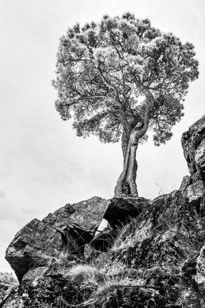 Sentinel by Hemant Jariwala