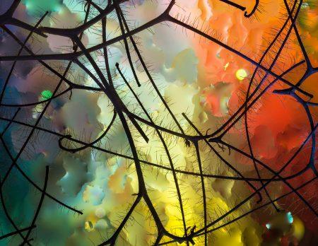 Miró's Garden by Elizabeth Kazda