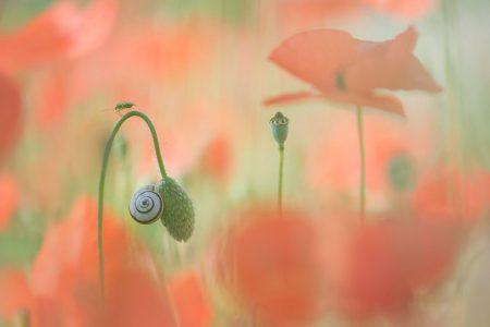 It's a Small World by Trui Heinhuis